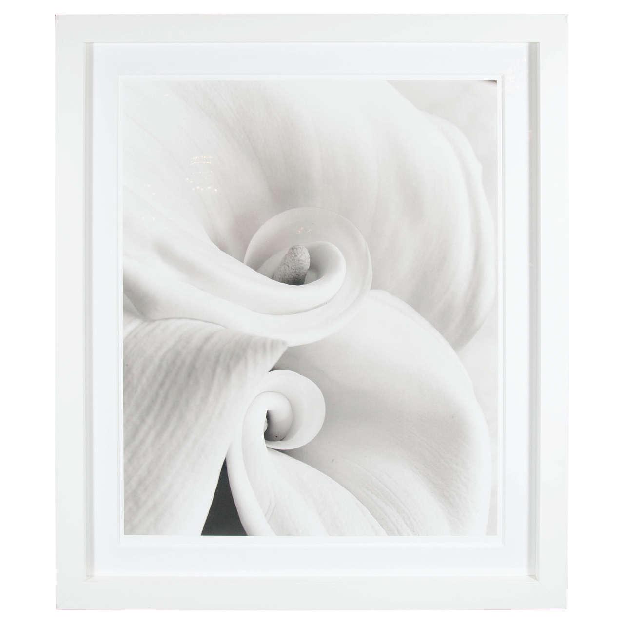 "Gorgeous Framed Photograph ""Fleur 1 ""by Sondra Wampler"