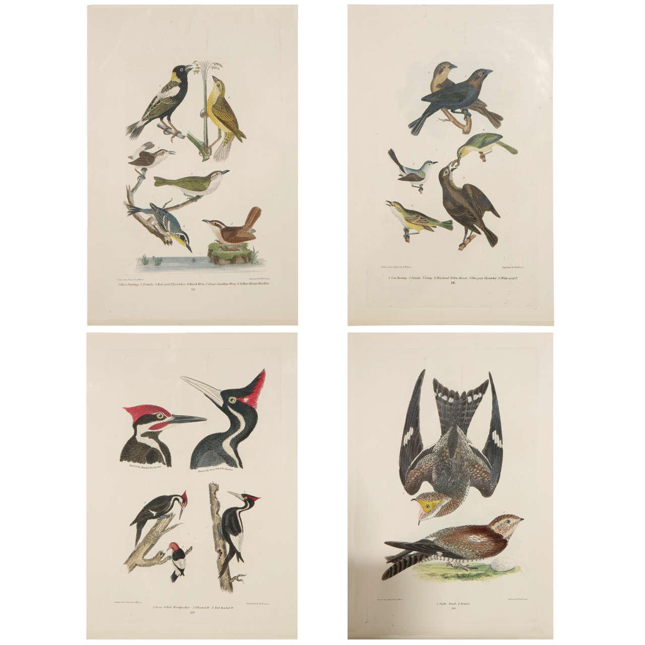 19th c. Framed Bird Prints For Sale at 1stdibs