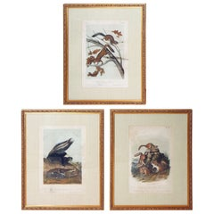 "Group of 11 Matted and Framed ""Quadrupeds"" after Audubon"