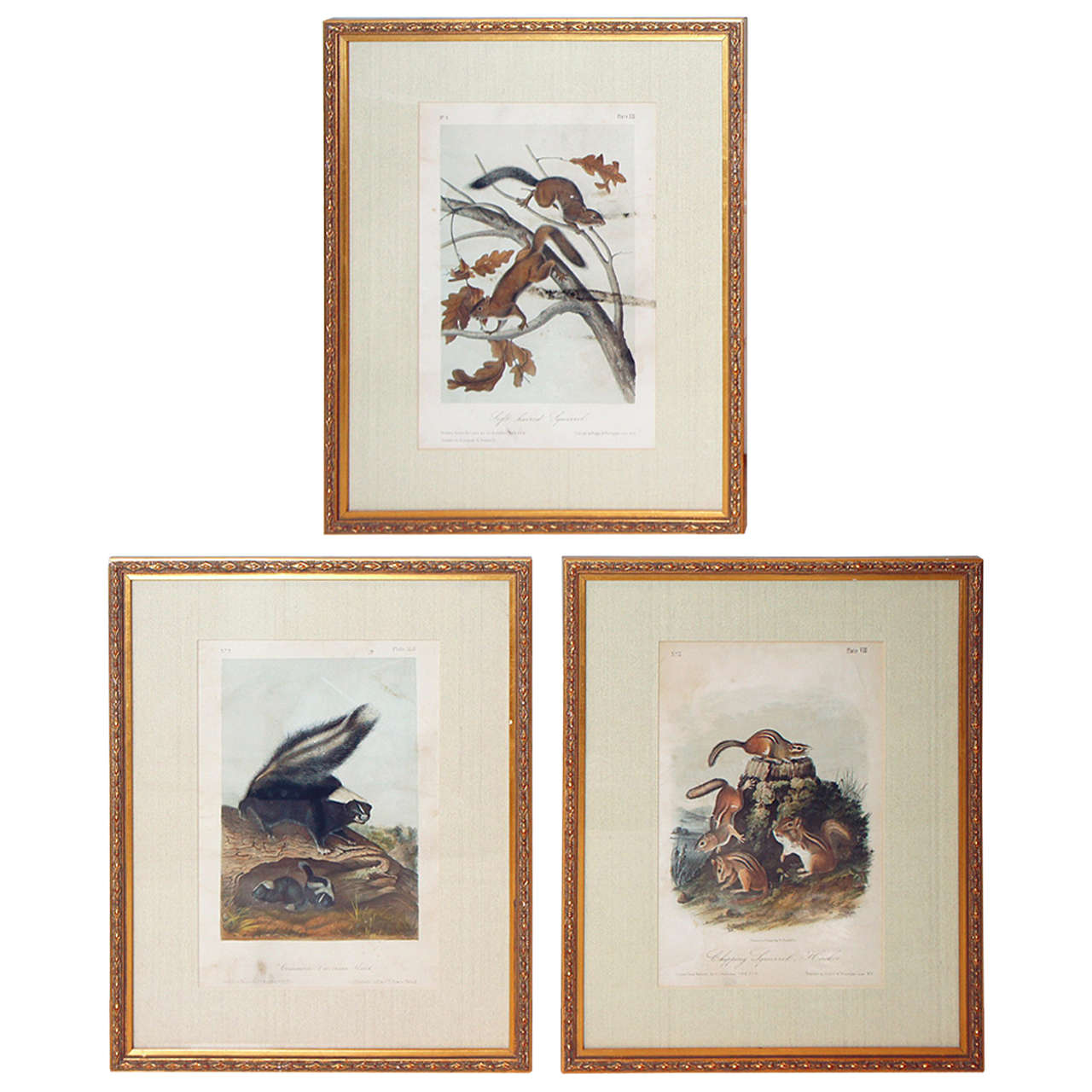 """Group of 11 Matted and Framed """"Quadrupeds"""" after Audubon"""