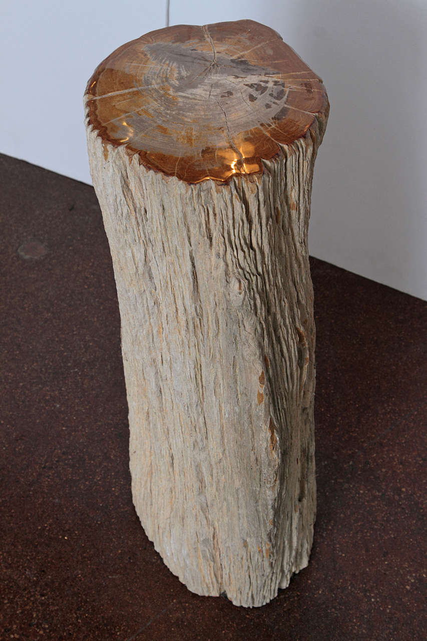 Petrified Wood At 1stdibs