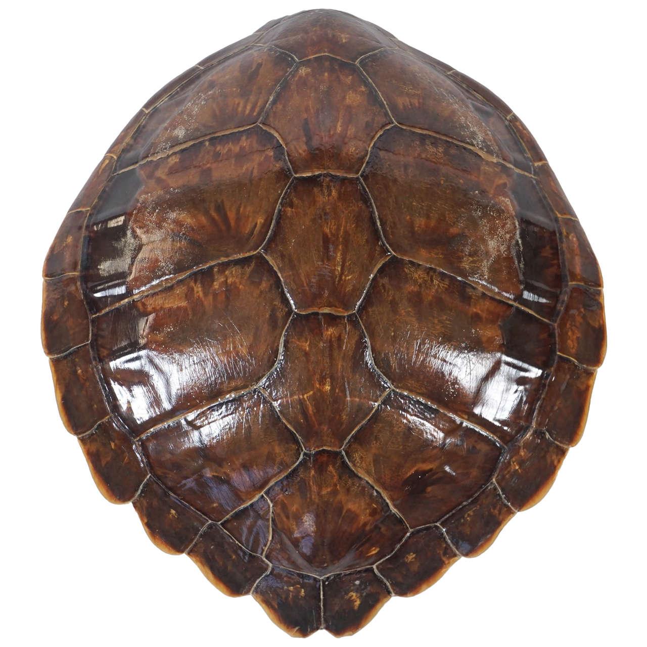 Antique Tortoise Shell Furniture