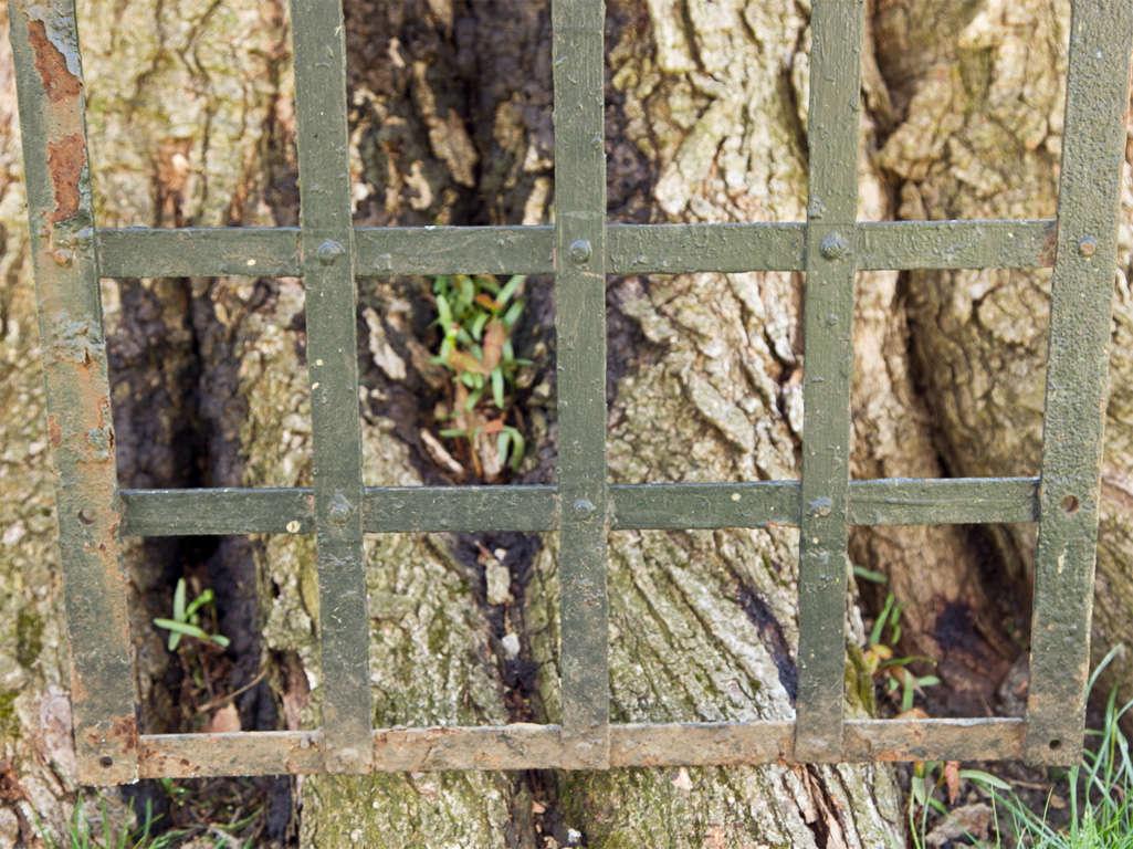 Wrought Iron Wall Trellis: Wrought-iron Trellis At 1stdibs