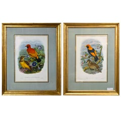 Fine Pair of Wonderfully Framed Lithographs