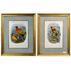 A Fine Pair Of Wonderfully Framed Lithographs.