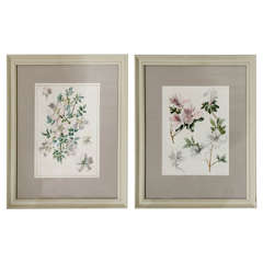 Pair of Botanical Watercolours by Dr Francis Russell