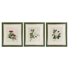 Set of Three Watercolours of Flowers