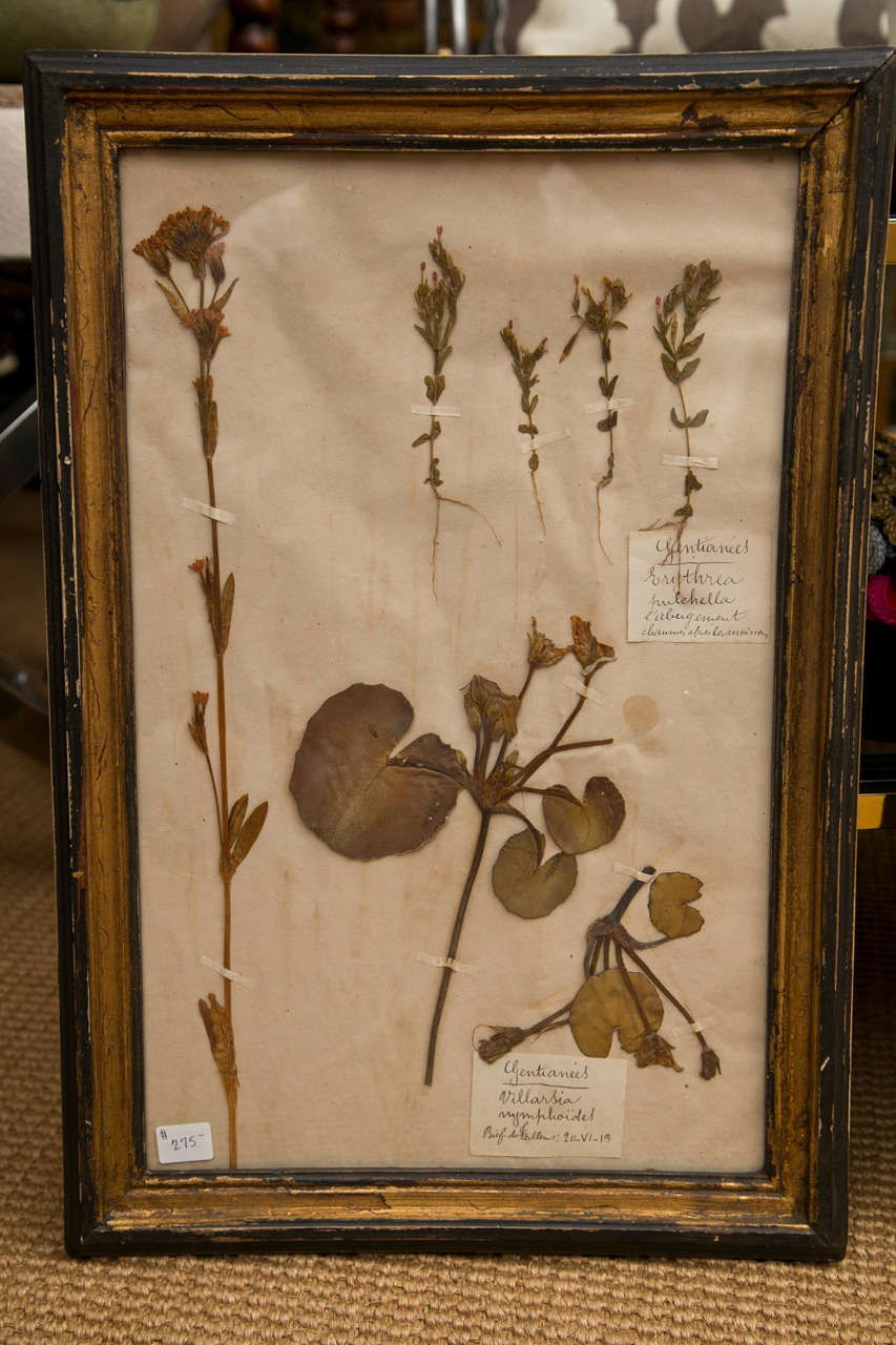 19th Century French Framed Botanical Specimens  8