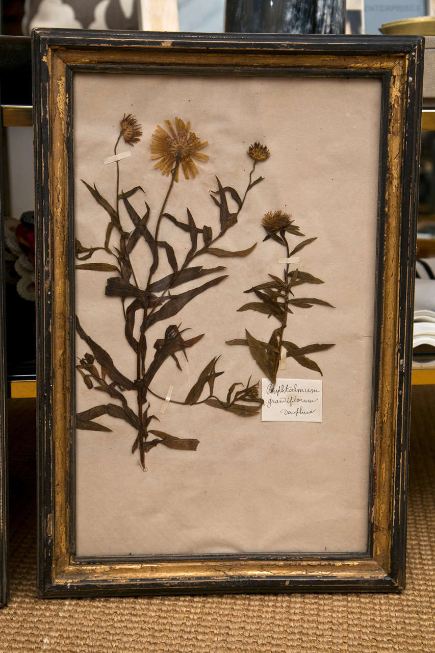19th Century French Framed Botanical Specimens  2
