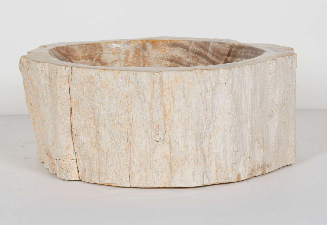 Rare Organic Petrified Wood Large Bowl Or Sink At 1stdibs