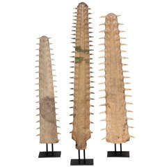 Set Of Three Rostrums - Sawfish