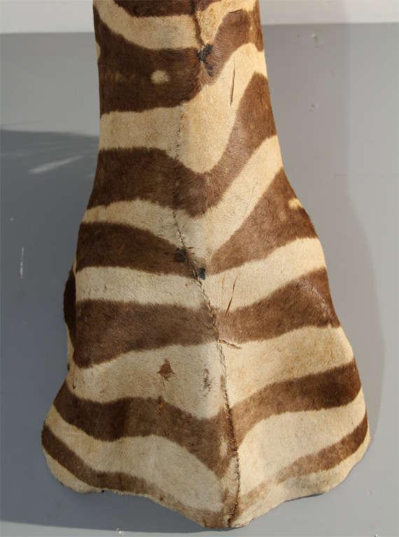 Vintage Taxidermy Zebra Head 2