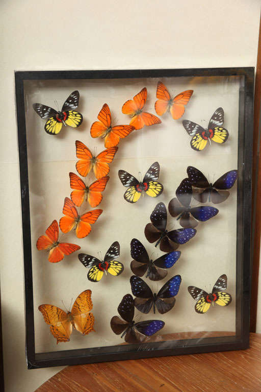 Framed Butterflies from Thailand image 4