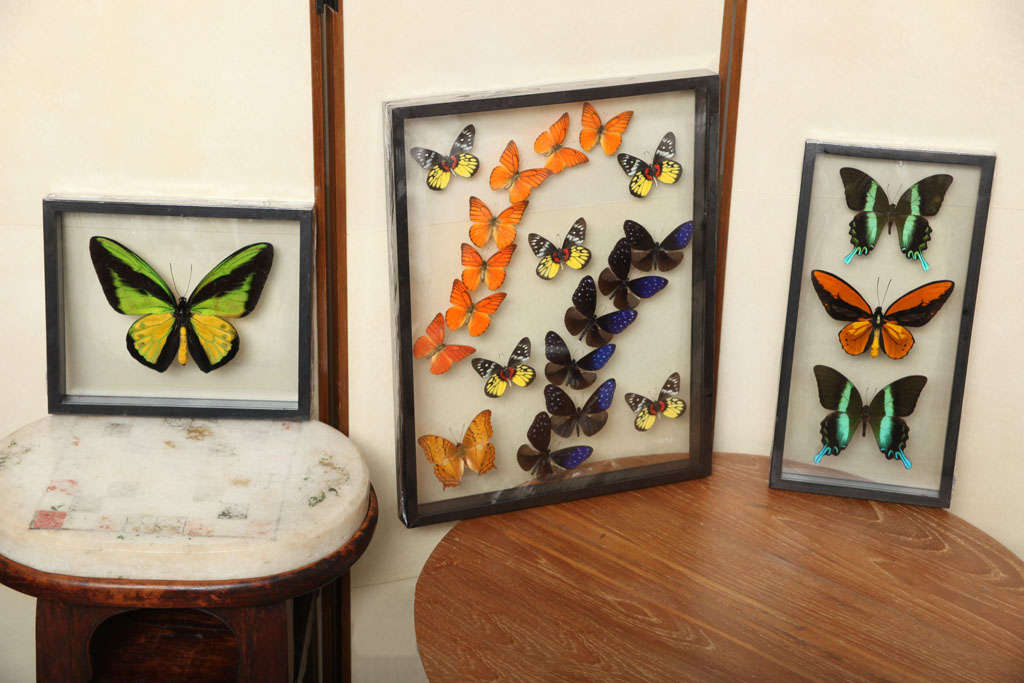 Framed Butterflies from Thailand image 2