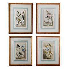 "Set of 4 Framed ""Martinet"" Birds Copper Engravings, ca. 1751 Paris"