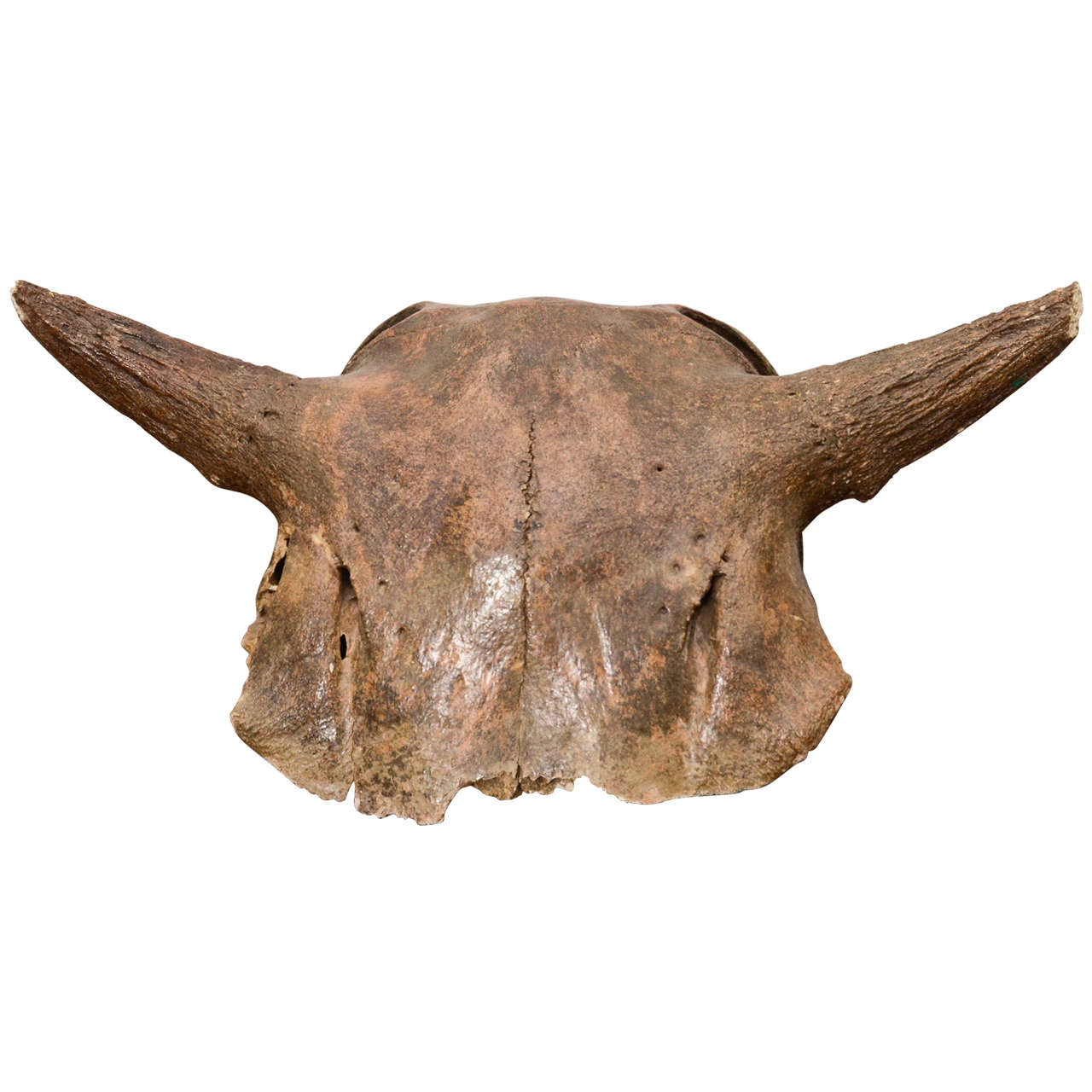 Aged and Patinated Cow Skull 1