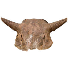 Aged and Patinated Cow Skull