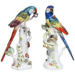 Pair Fine Antique German Meissen Porcelain Sculptures of Parrots