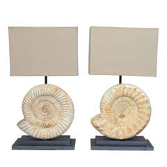 Pair of Madagascar Ammonites Lamps