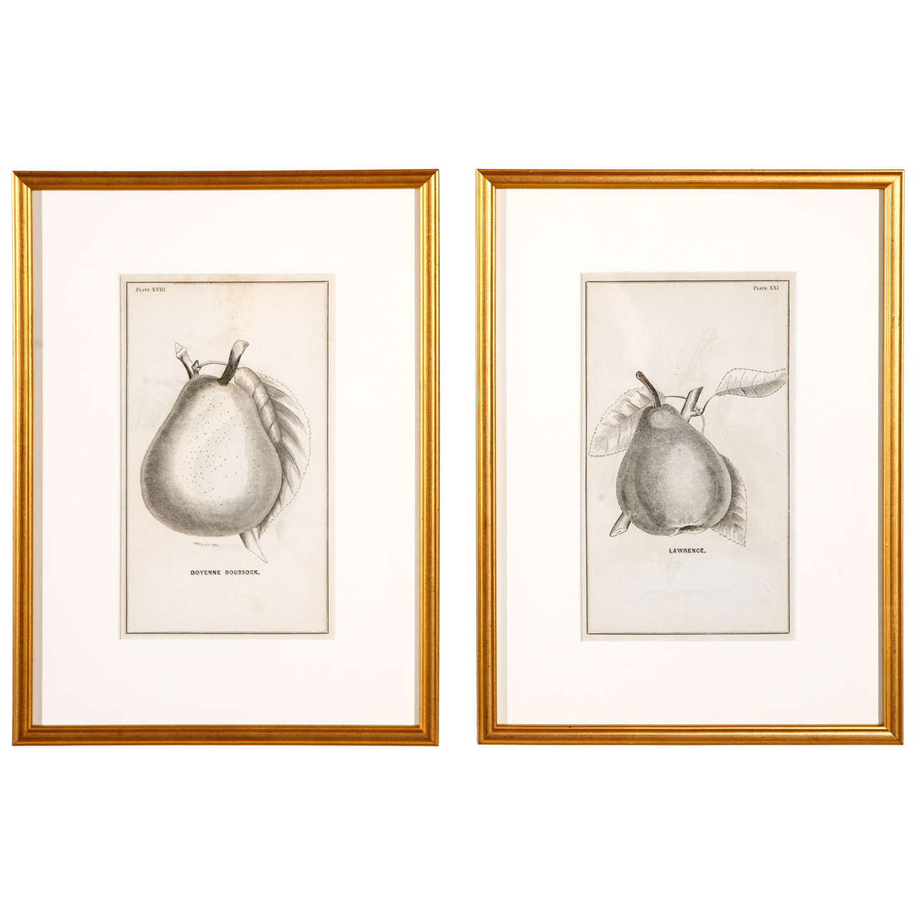 Gold Framed Pear Botanicals from 19th Century Catalogue