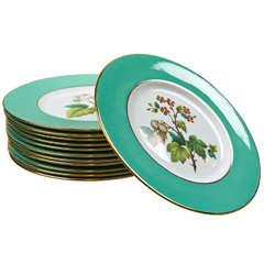 Set of 12 Spode Dinner Plates
