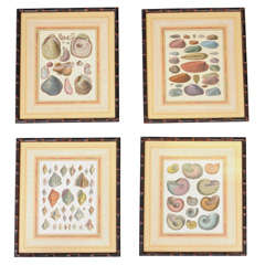 Antique Hand Colored Shells  Engravings