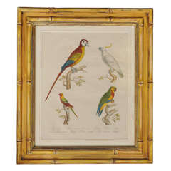 Antique Hand Colored  Parrots Lithograph