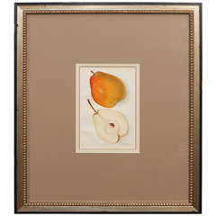 Architectural Digest Fruit Print
