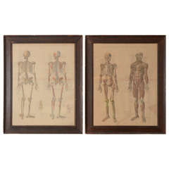Pair of Framed Anatomical Charts