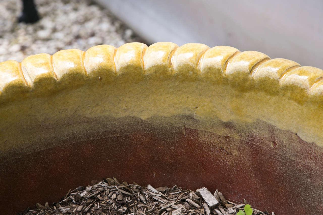 Yellow Glazed Terra Cotta Planters 5