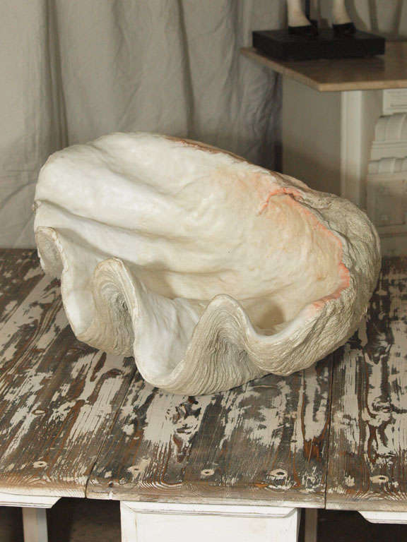 Giant Clam Shell 9