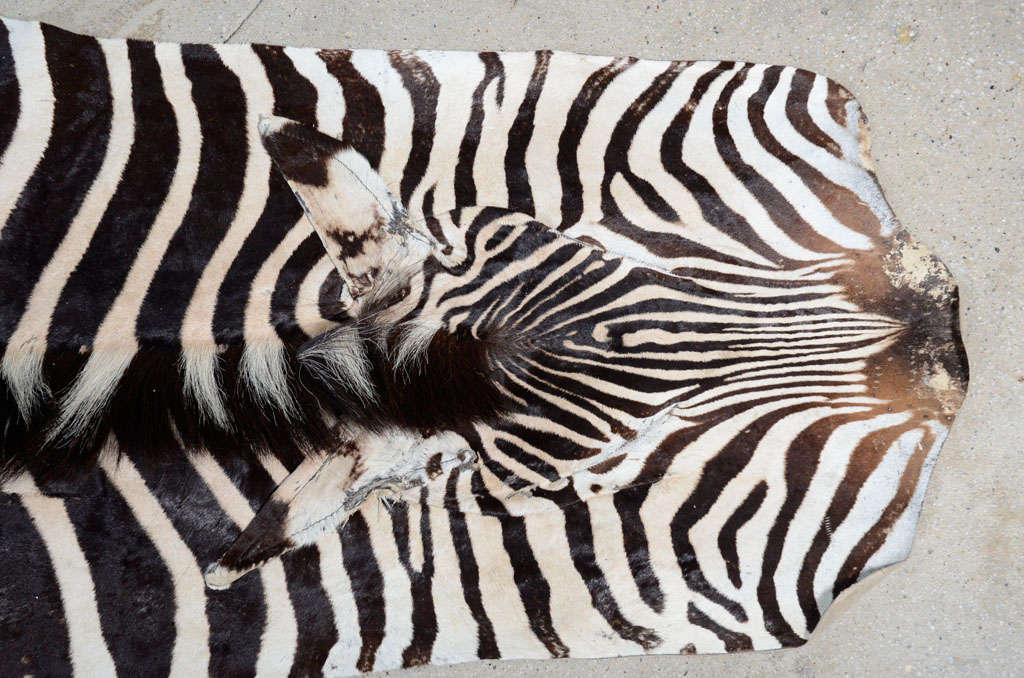 Zebra rug image 9
