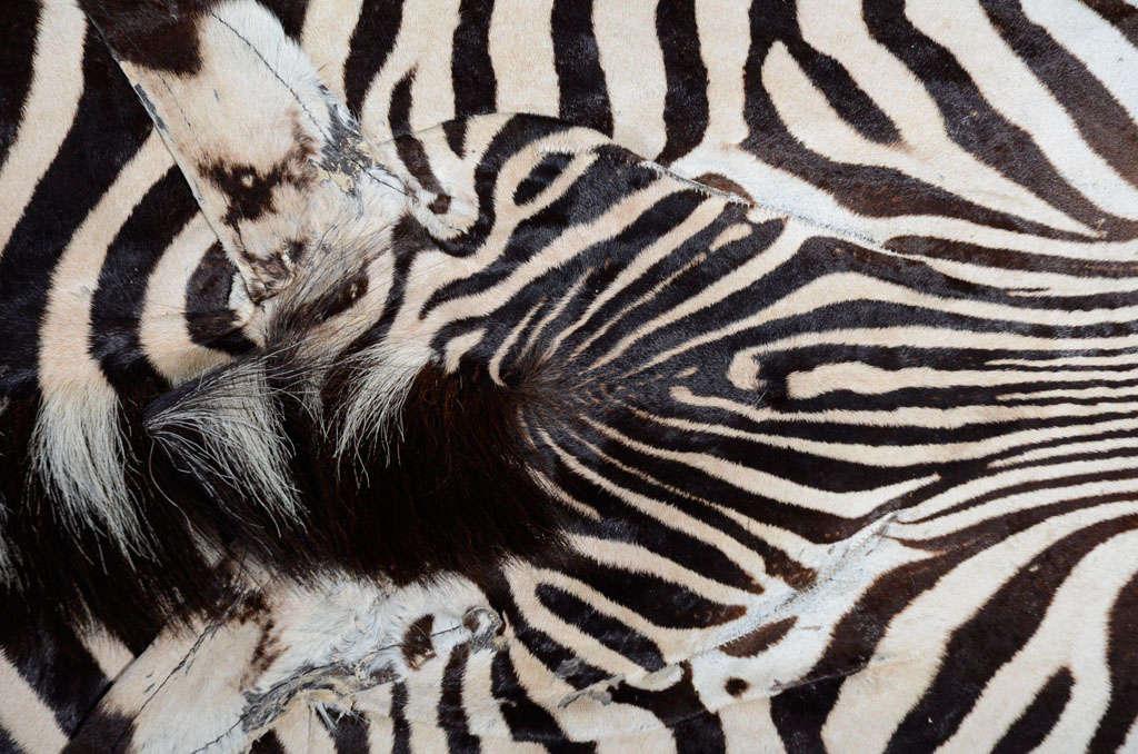 Zebra rug image 3