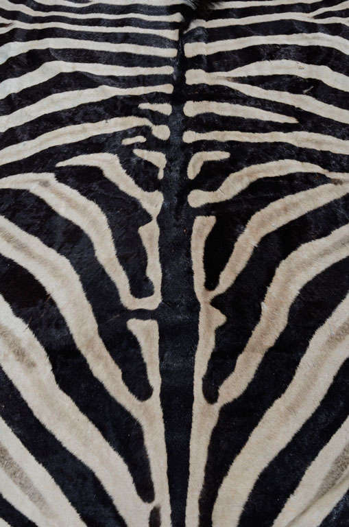 Zebra rug image 5
