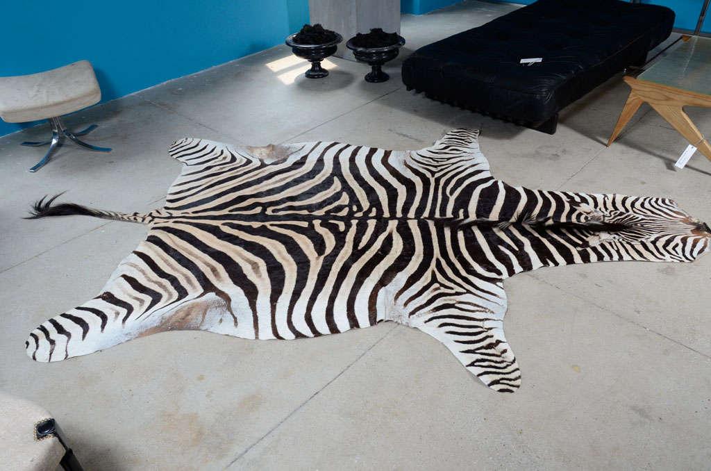 Zebra rug image 2