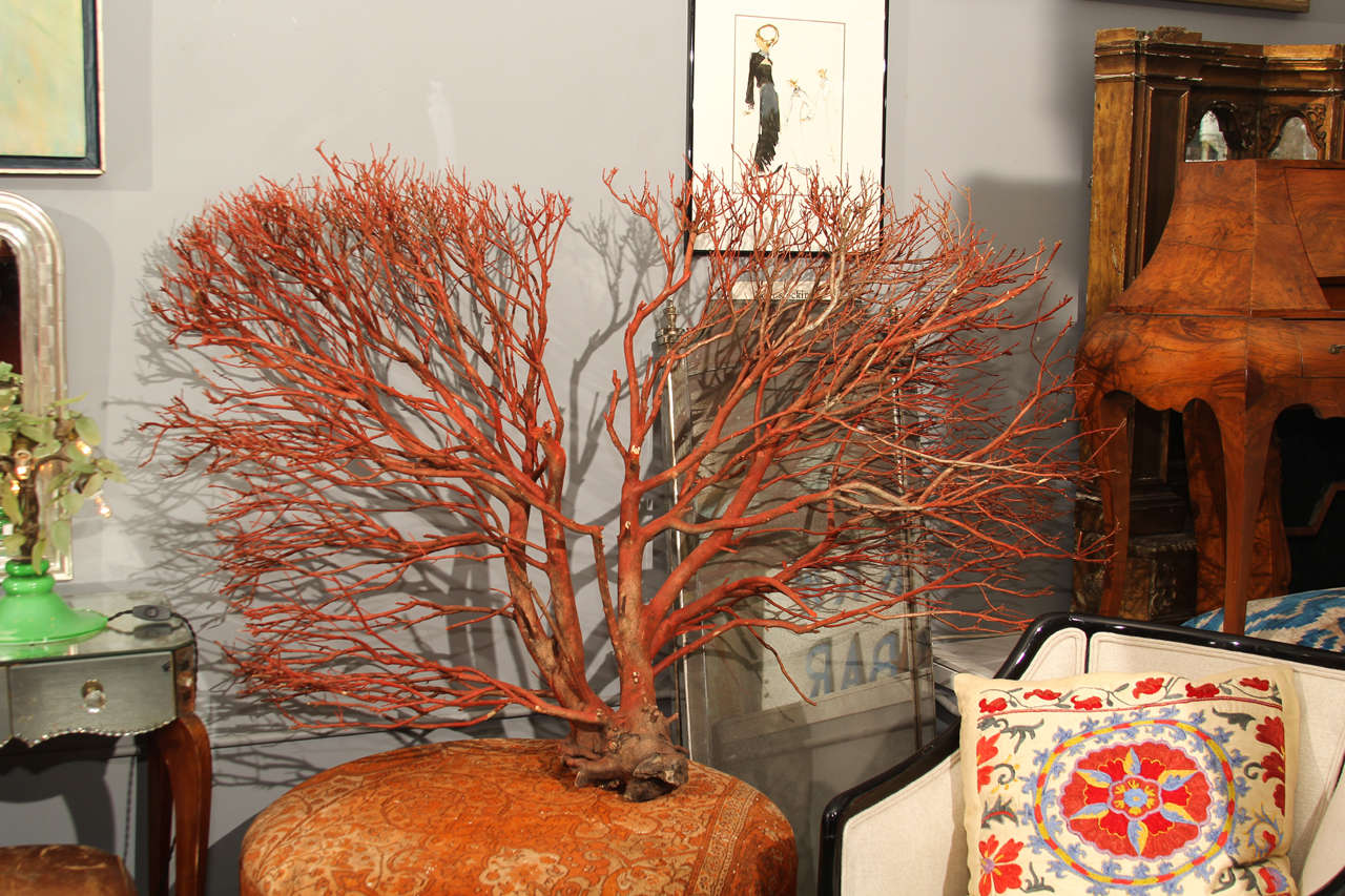 """Wood """"coral"""" Wall Sculpture 2"""