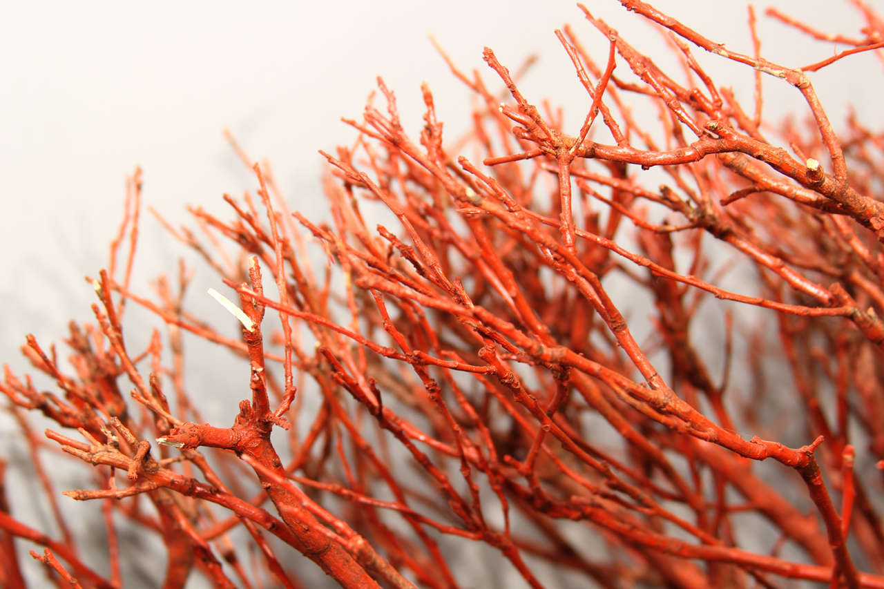 """Wood """"coral"""" Wall Sculpture 6"""