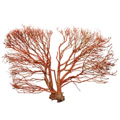 "Wood ""coral"" Wall Sculpture"