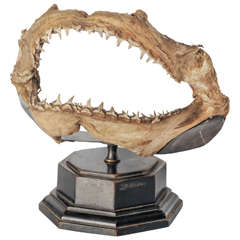 19th Century Shark Mouth Mounted on Wooden Base