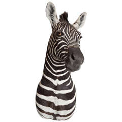 Taxidermy, Zebra