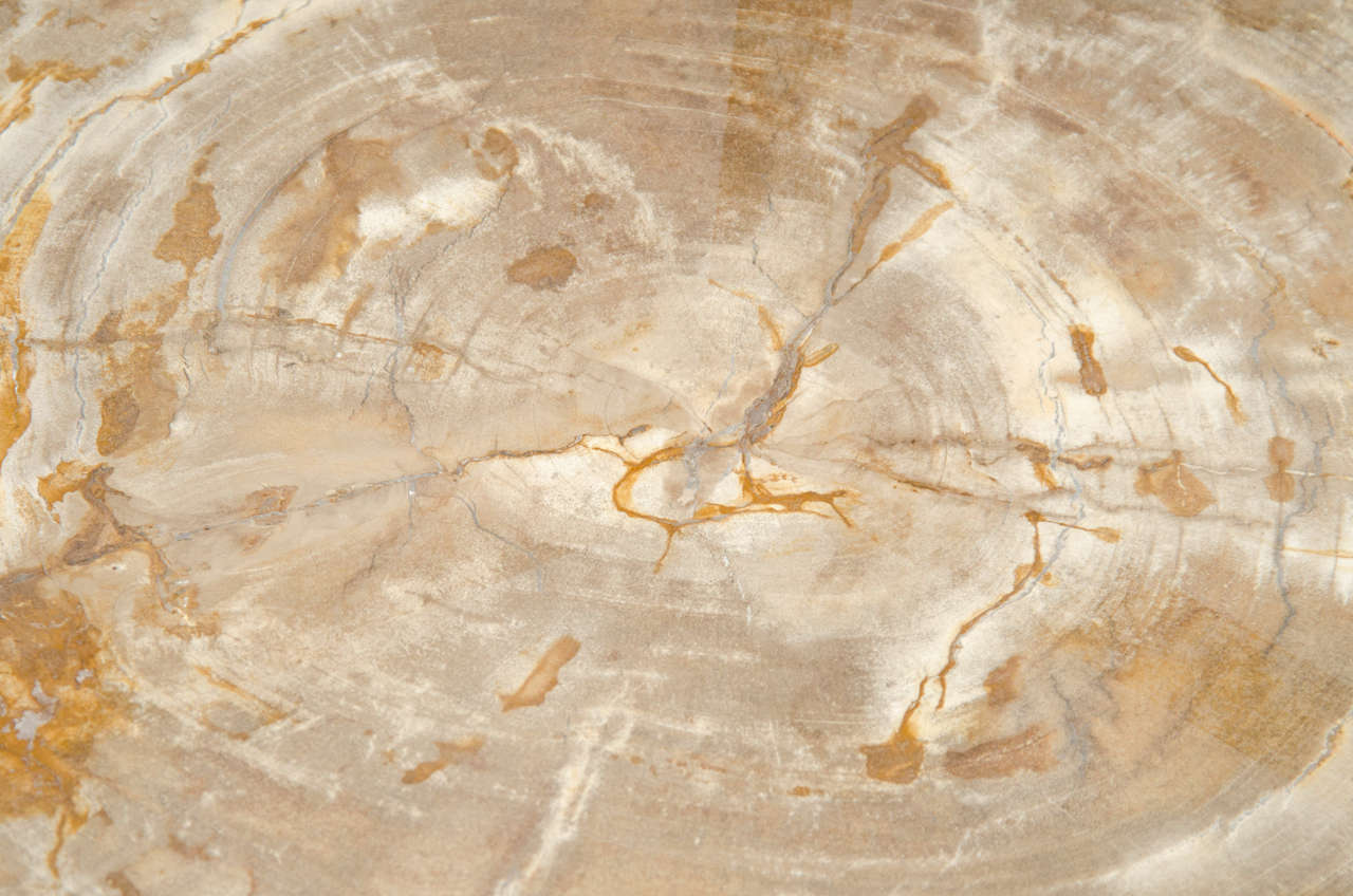 A Petrified Wood and Bronze Occasional Table 4