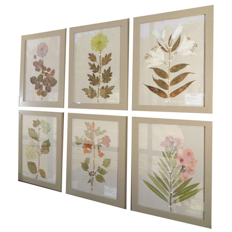 Herbiers/Botanicals/Pressed Flowers