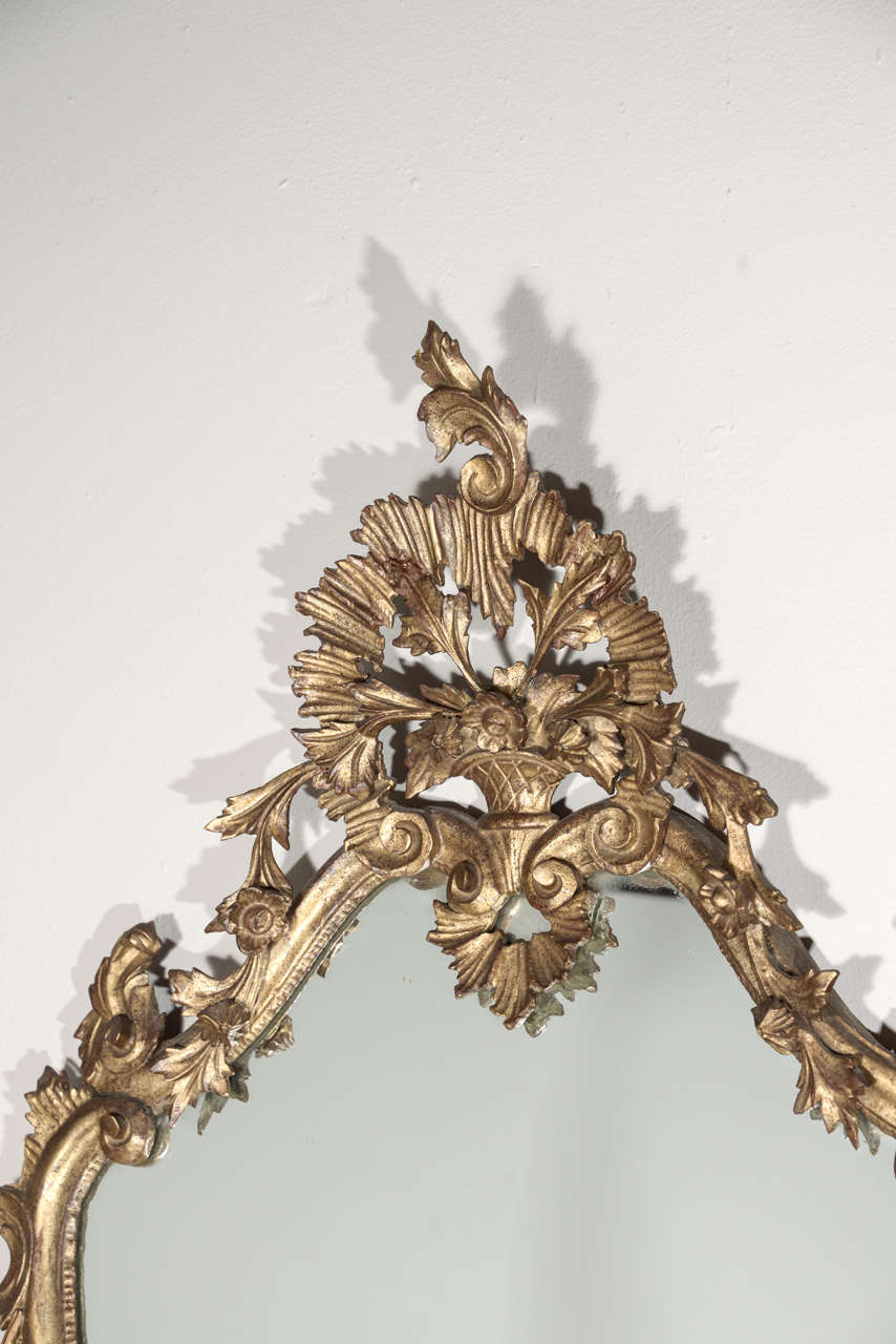 Late 19th c Italian Louis XV gilt wood carved mirrors 4