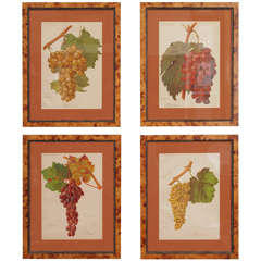 Four French Belle Epoque Chromolithographs of Grapes