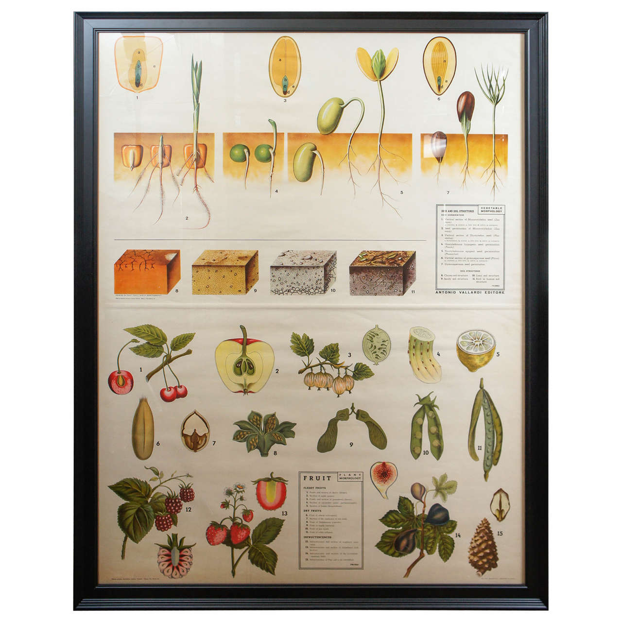Large Framed 20th Century Scientific Teaching Print at 1stdibs