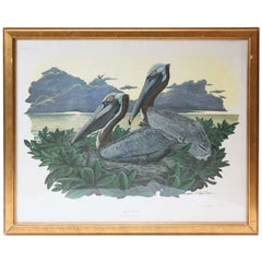 Brown Pelican Lithograph, Signed