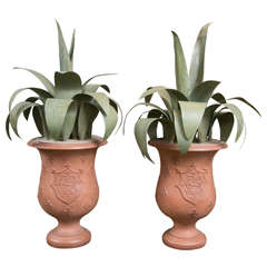 Terra Cotta Planters with Aloe Leaf Foliage