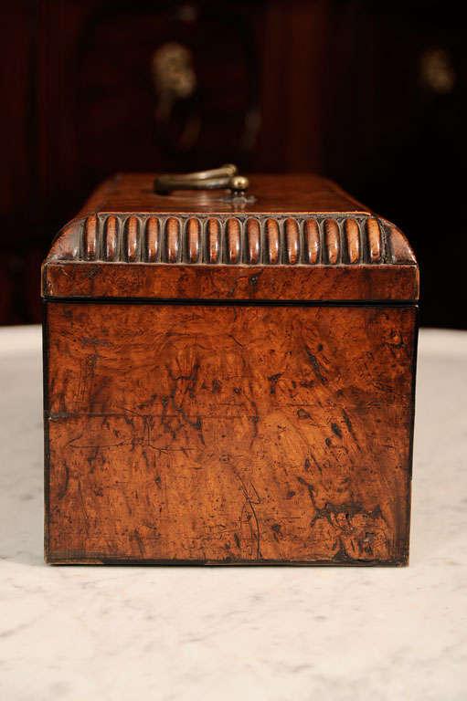 William VI Burr Walnut Tea Caddy 5