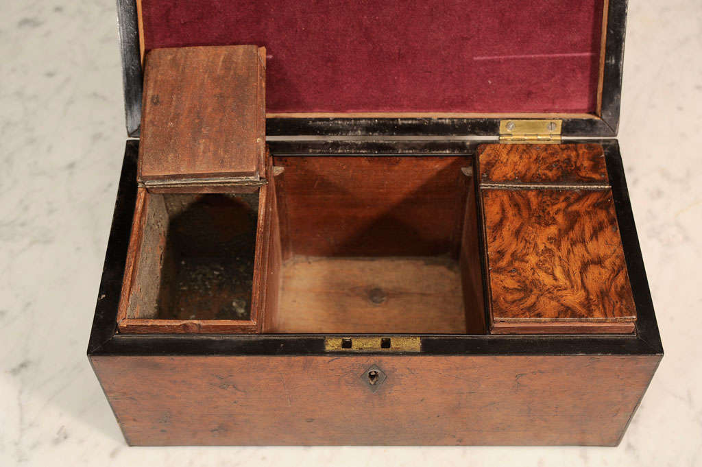 William VI Burr Walnut Tea Caddy 7