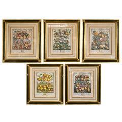 Set of Five Framed Prints of Fruit Each Matted Ebonized And Parcel Gilt Frame